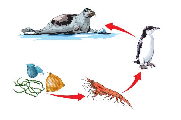 O esquema acima representa uma cadeia alimentar aquática.