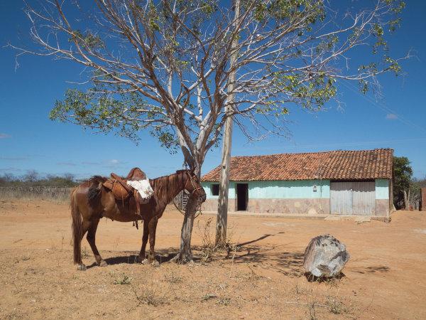 """Grande parte da literatura nordestina retrata a vida dura do sertanejo, como a obra """"Vidas secas"""", de Graciliano Ramos."""