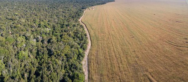 Parque Nacional do Xingu vs. área desmatada para cultivo agrícola, no Mato Grosso.