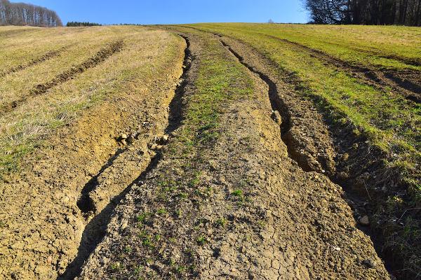 """Sulcos provocados pelos """"caminhos"""" da água – erosão pluvial."""