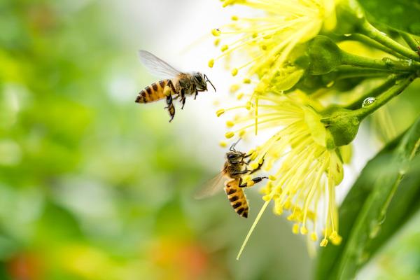 As abelhas vivem em sociedades, nas quais é possível observar a divisão de tarefas entre os indivíduos.