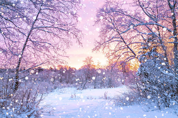 Pôr do Sol com neve na Floresta Boreal, Canadá