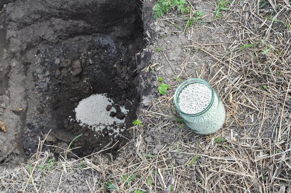 Nitrato de amônio sendo aplicado em preparação do solo para plantio.
