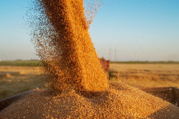 O Brasil lidera a produção mundial de soja.