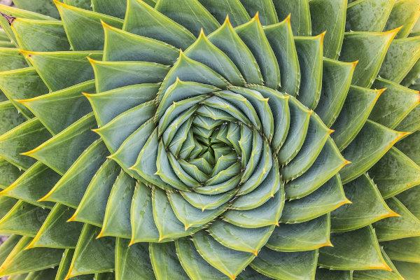 A geometria estuda essas formas para explicar os formatos da natureza e do meio em que vivemos.