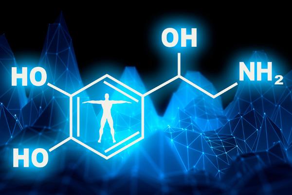 A noradrenalina atua como hormônio e como neurotransmissor em nosso organismo.
