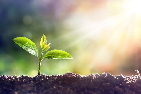 As plantas necessitam de alguns elementos específicos para o seu desenvolvimento.