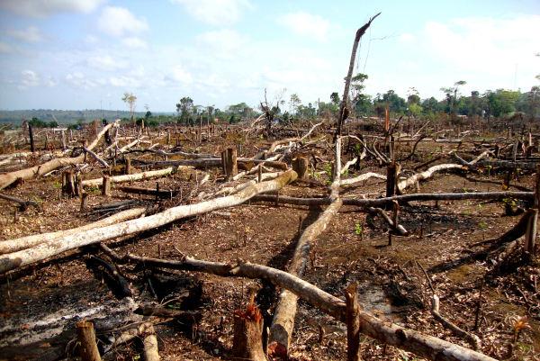 O desmatamento pode levar à fragmentação do ambiente, fazendo com que o ambiente, antes contínuo, apresente-se em manchas.