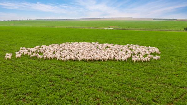 A pecuária bovina é uma das principais atividades econômicas do Tocantins.