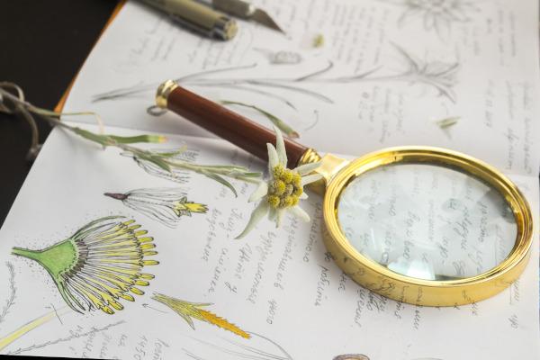 Botânica é uma área da Biologia voltada para o estudo das plantas.