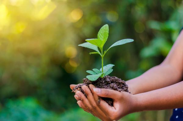 O desenvolvimento sustentável alia o progresso socioeconômico com a preservação ambiental.