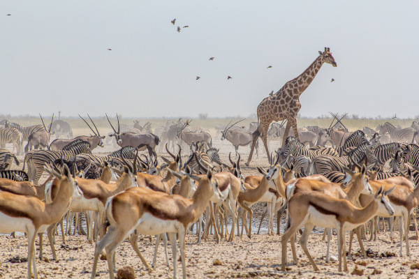 Fauna da Savana africana