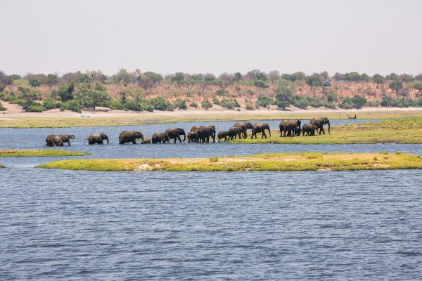Elefantes em um lago