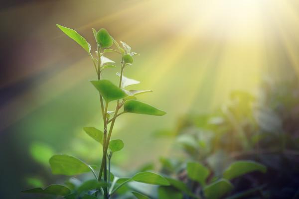 Imagem de uma planta.