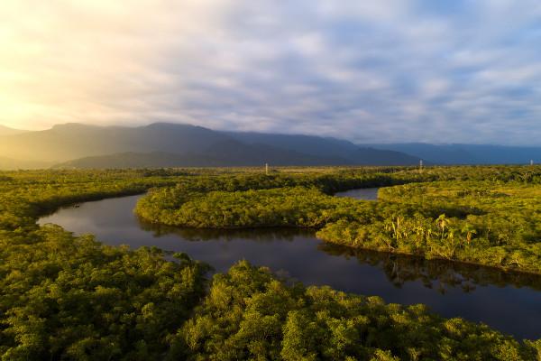 No dia 5 de setembro, comemora-se o dia a maior floresta tropical do planeta: a Amazônia.