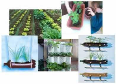 A horta é um excelente meio para potencializar o aprendizado do aluno e despertar seu interesse para a alimentação saudável