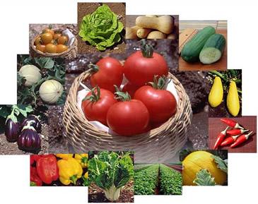 Todos os alimentos possuem substâncias orgânicas