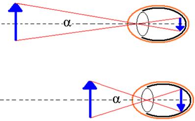 O tamanho da imagem formada na retina é proporcional ao tamanho do objeto e ao ângulo de visão α. Quanto mais próximo, maior será o ângulo de visão e maior a imagem