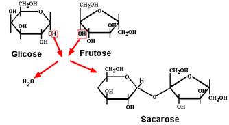 S�ntese de forma��o da sacarose