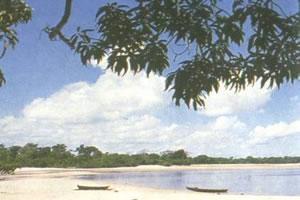 Vegetação Litorânea - vegetação de regiões costeiras