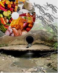 Alimentação, saneamento e cuidados são formas de prevenir doenças
