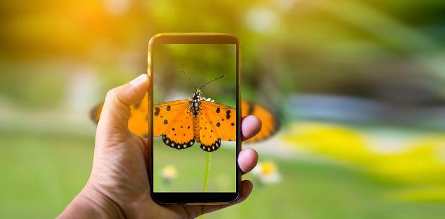 Home tirando foto de borboleta posada em folha com celular