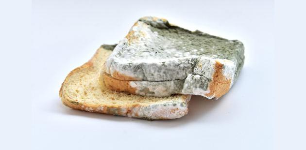 pão de forma com fungo