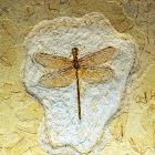 Registro fóssil de uma libélula