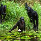 Macacos em seu habitat