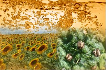 O uso de biocombustíveis ajuda a diminuir o efeito estufa