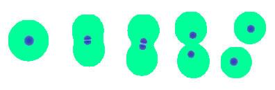 Esquema ilustrando a divisão binária em protozoários