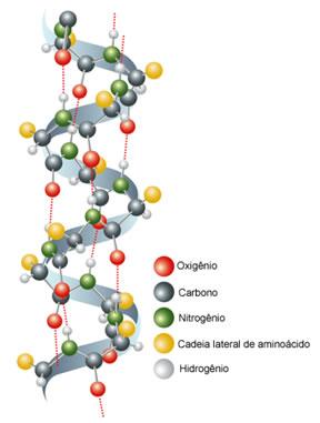Estrutura secundária do colágeno