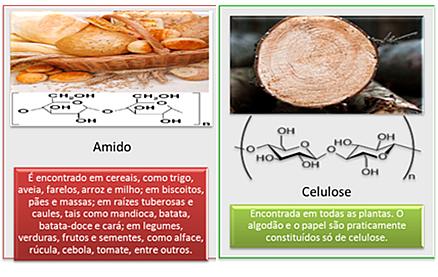 Estruturas e fontes de amido e celulose, os principais polissacarídeos