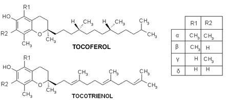 Estruturas da Vitamina E, em que α, β, γ ou δ são determinados de acordo com a posição do grupamento metila