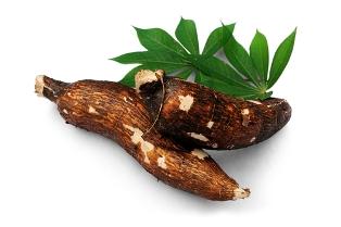 Manihot esculenta é o nome científico da mandioca, também chamada de macaxeira e aipim