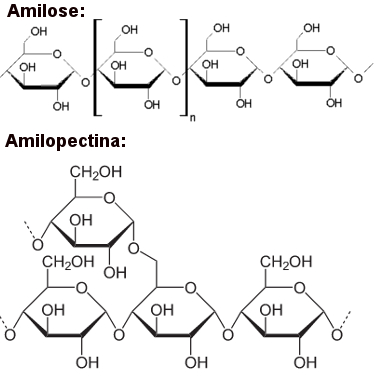 Amilose e amilopectina formadoras do amido