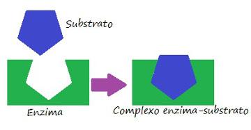 Observe o esquema exemplificando a especificidade da enzima