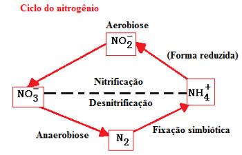 Ciclo do nitrogênio em exercício que envolve nomenclatura de óxido