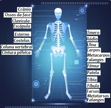 Observe alguns ossos do esqueleto