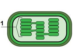 Observe a estrutura de um cloroplasto