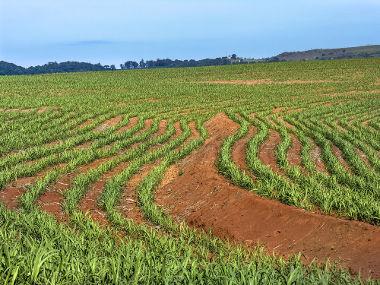 A produção de cana-de-açúcar e outros tipos de biomassa costuma ocupar grandes áreas
