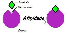 Observe atentamente o modelo chave-fechadura, no qual o substrato encaixa-se perfeitamente no sítio ativo
