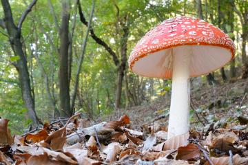 Os fungos fazem parte do reino Fungi
