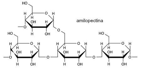 Fórmula estrutural da amilopectina