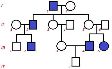 Observe o heredograma e as diferentes famílias representadas