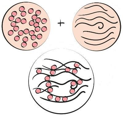 Representação esquemática da formação do glúten