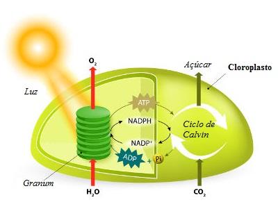 Observe o esquema com os principais pontos da fotossíntese