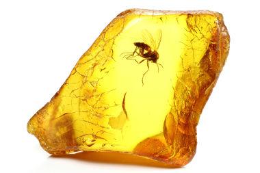 O âmbar é uma resina fóssil. Na imagem, um inseto está preso no interior da resina e pode ser conservado por vários anos