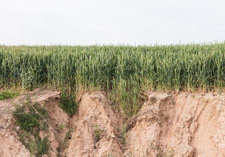 As técnicas utilizadas na agricultura intensiva podem acarretar prejuízos irreparáveis ao solo