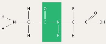 Modelo da estrutura primária de uma proteína